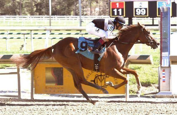 Sagamore Farm filly Riley's Choice a sharp maiden winner at Laurel