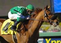 February 13, 2010.Caracortado riden by Paul Atkinson, wins The Robert B. Lewis Stakes at Santa Anita Park, Arcadia, CA