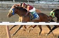 Sassicaia wins 2016 Toboggan