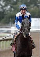 /horse/Scipion