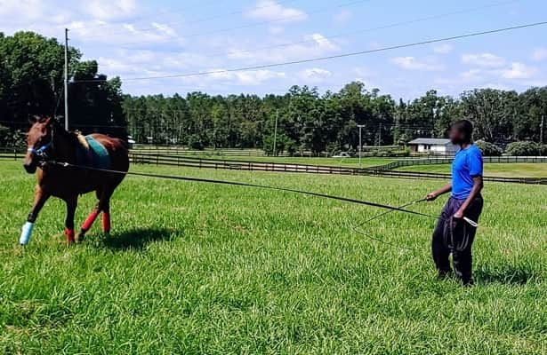 Retired horses offer 'Second Chances' for troubled youth