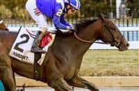 /horse/Shagaf