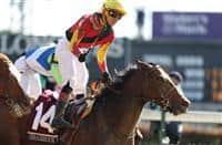 /horse/Shamrock Rose