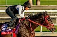 /horse/Shancelot