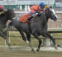 2006 Maryland Juvenile Filly Champion Spectacular Malibu, her first win after a 13-month layoff, drives to a 1 1/2 length victory in a 6 furlong allowance at Laurel Park, February 28, 2008.