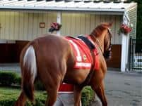 /horse/Shimmering Moment