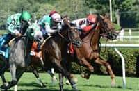 Shining Copper wins 2016 Lure
