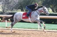Silver Dust works at OP for Arkansas Derby