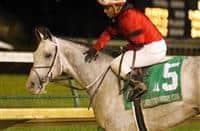 /horse/Silver Prospector 1