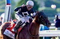 /horse/Sir Winston 1