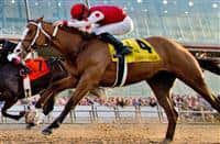 /horse/Snapper Sinclair