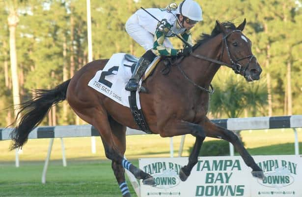 Sole Volante tops Independence Hall in Sam F. Davis Stakes