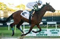 /horse/Sole Volante