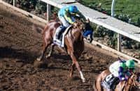 /horse/Solomini