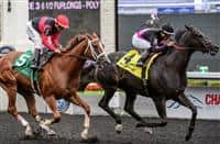 Stacked Deck(4) with Jockey Luis Saez aboard runs to victory at the Bold Venture Stakes at Woodbine Race Course in Toronto, Canada on September 13, 2015.
