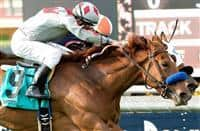 Stays in Vegas wins 2016 Senorita