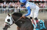 Strong Mandate (no. 9), ridden by Jose Ortiz and trained by D. Wayne Lukas, wins the 109th running of the grade 1 Hopeful Stakes for two year olds on September 2, 2013 at Saratoga Race Course in Saratoga Springs, New York. (Bob Mayberger/ Eclipse Sportswire)