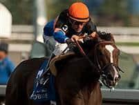 /horse/Strut The Course