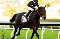 /horse/Sueno