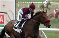 Tiz Flirtatious with Julien Leparoux aboard wins the Grade 2 John C. Mabee Stakes at Del Mar Race Course in Del Mar, California on August 11, 2013. (Zoe Metz/ Eclipse Sportswire)