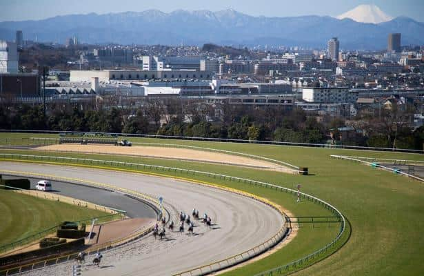 Japan Road to the Derby: Horses to know in the Hyacinth