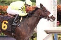 /horse/Trophy Chaser