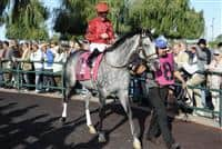 Turallure with Julien Leparoux aboard getting ready for the Grade 1 Woodbine Mile Stakes on September 18th.  Turallure went on to win the Mile Stakes by a neck.