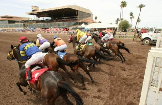 turf paradise live betting strategy