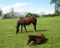 Untouched Talent with her Tiznow weanling