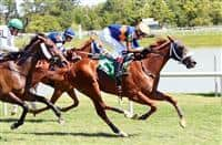 Undulated wins at Laurel (8-7-16)