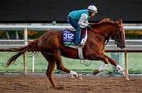 /horse/United 1