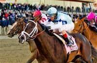 /horse/Verrazano