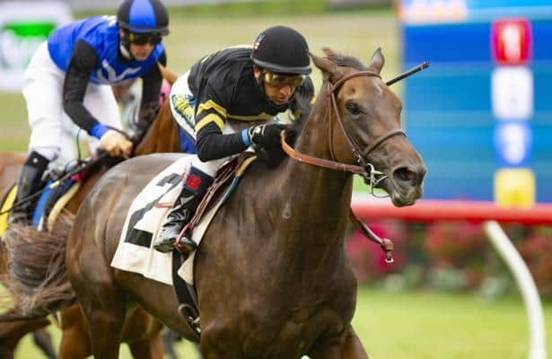 'She should have no excuse': Vexatious set for Keeneland's Spinster