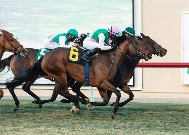 Viadera noses out stablemate in thrilling Matriarch