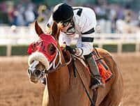 /horse/Warrens Veneda