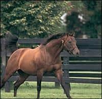 /horse/Wavering Monarch