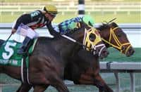 #4 Wildcat Red (FL) with jockey Luis Saez on board wins the Fountain Of Youth Stakes G2 at Gulfstream Park. Hallandale Beach, Florida 02-22-2014
