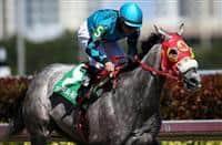 /horse/X Y Jet