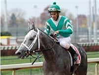 /horse/Yankee Fourtune