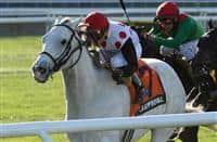 /horse/Za Approval