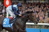 /horse/Kingston Hill