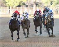 Ride On Curlin is victorious this weekend at Oaklawn Park in Hot Springs, Arkansas.