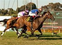 /horse/Belle Royale