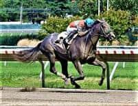 /horse/Affable Monarch
