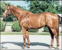 /horse/Carson City
