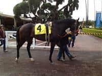 First race at Santa Anita
