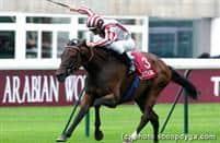 /horse/Cirrus Des Aigles