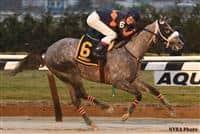 /horse/El Areeb