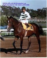 /horse/Exceller