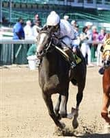 /horse/Trenton Traveler